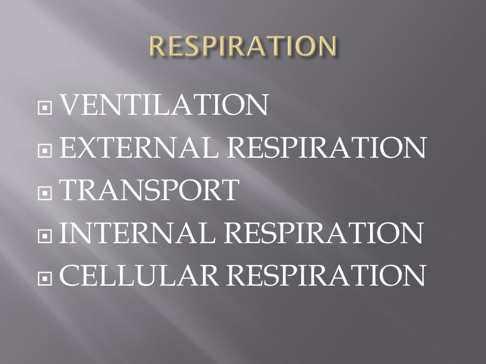  VENTILATION  EXTERNAL RESPIRATION  TRANSPORT  INTERNAL RESPIRATION  CELLULAR RESPIRATION