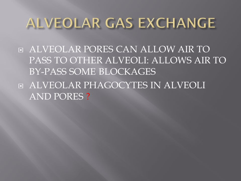  ALVEOLAR PORES CAN ALLOW AIR TO PASS TO OTHER ALVEOLI: ALLOWS AIR TO BY-PASS SOME BLOCKAGES  ALVEOLAR PHAGOCYTES IN ALVEOLI AND PORES ?