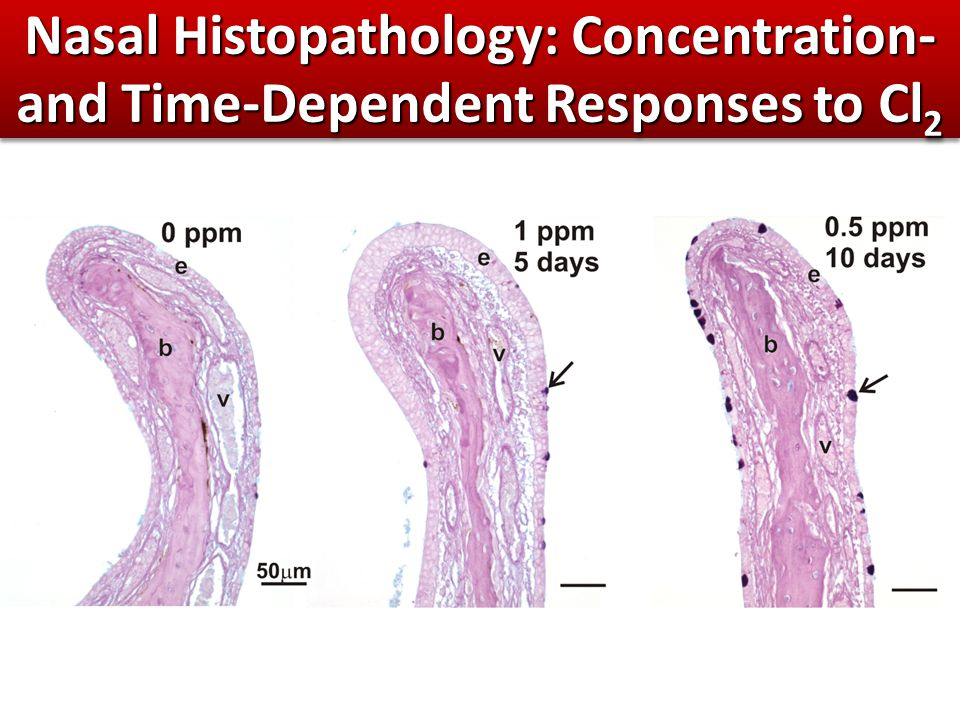 Nasal Histopathology: Concentration- and Time-Dependent Responses to Cl 2