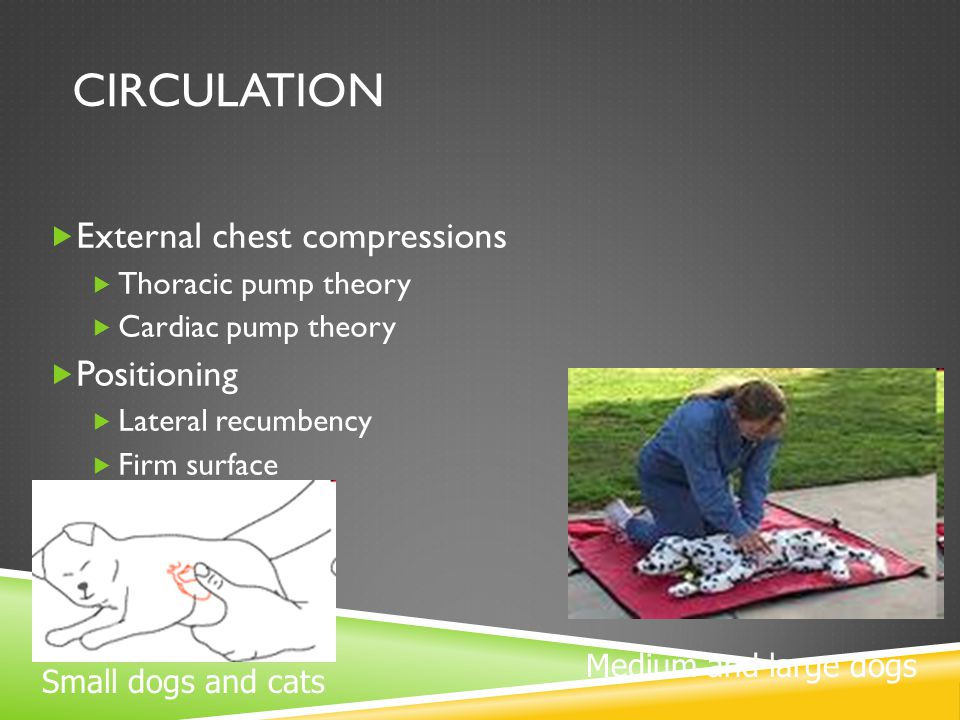 CIRCULATION  External chest compressions  Thoracic pump theory  Cardiac pump theory  Positioning  Lateral recumbency  Firm surface Medium and la