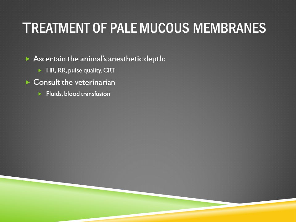 T REATMENT OF PALE MUCOUS MEMBRANES  Ascertain the animal's anesthetic depth:  HR, RR, pulse quality, CRT  Consult the veterinarian  Fluids, blood