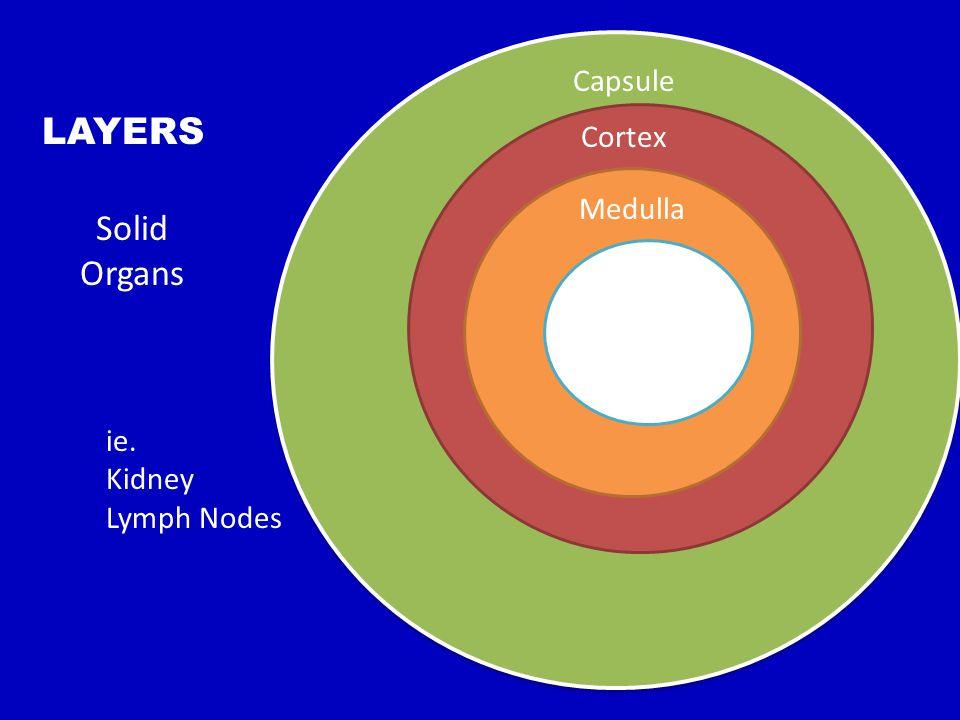 HILUS Vessels Enter Medulla Cortex Capsule LAYERS Solid Organs ie. Kidney Lymph Nodes