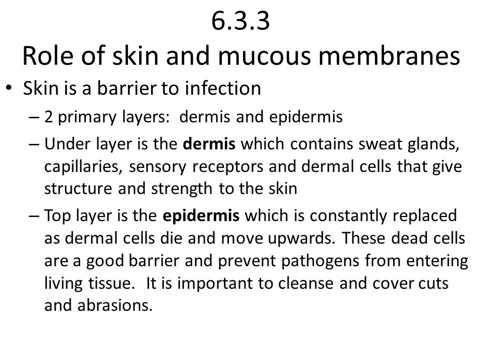 6.3.3 Role of skin and mucous membranes Skin is a barrier to infection – 2 primary layers: dermis and epidermis – Under layer is the dermis which contains sweat glands, capillaries, sensory receptors and dermal cells that give structure and strength to the skin – Top layer is the epidermis which is constantly replaced as dermal cells die and move upwards.