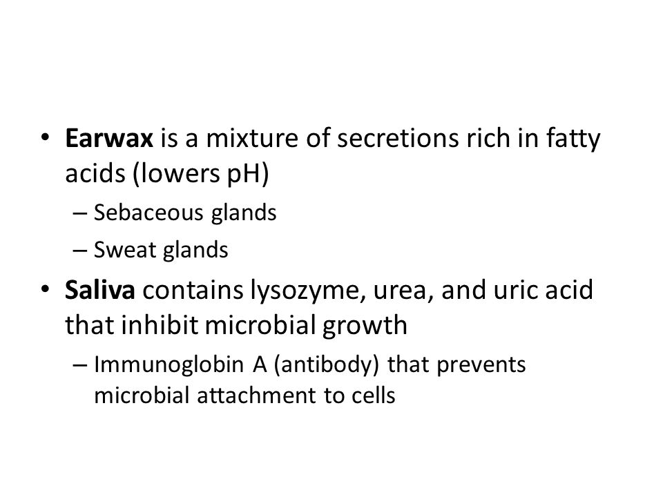 Earwax is a mixture of secretions rich in fatty acids (lowers pH) – Sebaceous glands – Sweat glands Saliva contains lysozyme, urea, and uric acid that inhibit microbial growth – Immunoglobin A (antibody) that prevents microbial attachment to cells