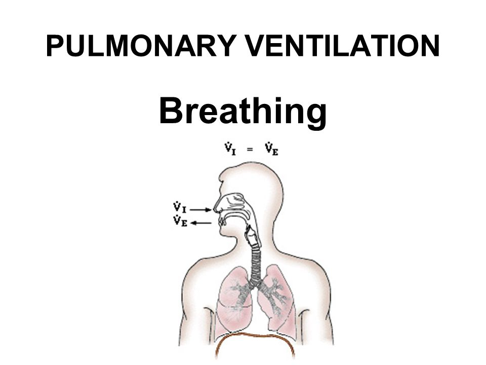PULMONARY VENTILATION Breathing
