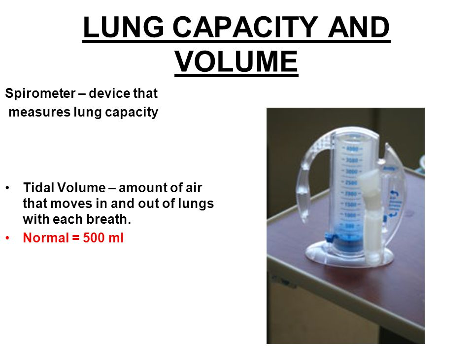 LUNG CAPACITY AND VOLUME Spirometer – device that measures lung capacity Tidal Volume – amount of air that moves in and out of lungs with each breath.