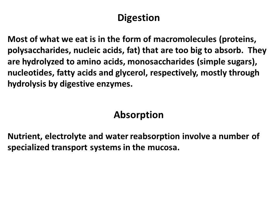 Digestion Most of what we eat is in the form of macromolecules (proteins, polysaccharides, nucleic acids, fat) that are too big to absorb.