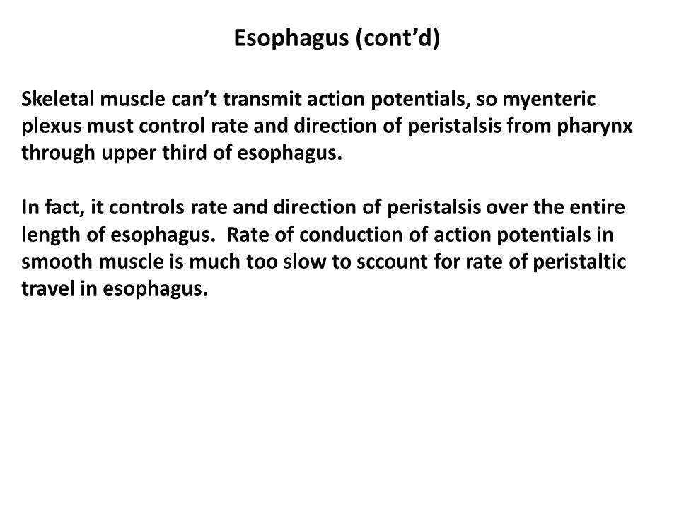 Esophagus (cont'd) Skeletal muscle can't transmit action potentials, so myenteric plexus must control rate and direction of peristalsis from pharynx through upper third of esophagus.