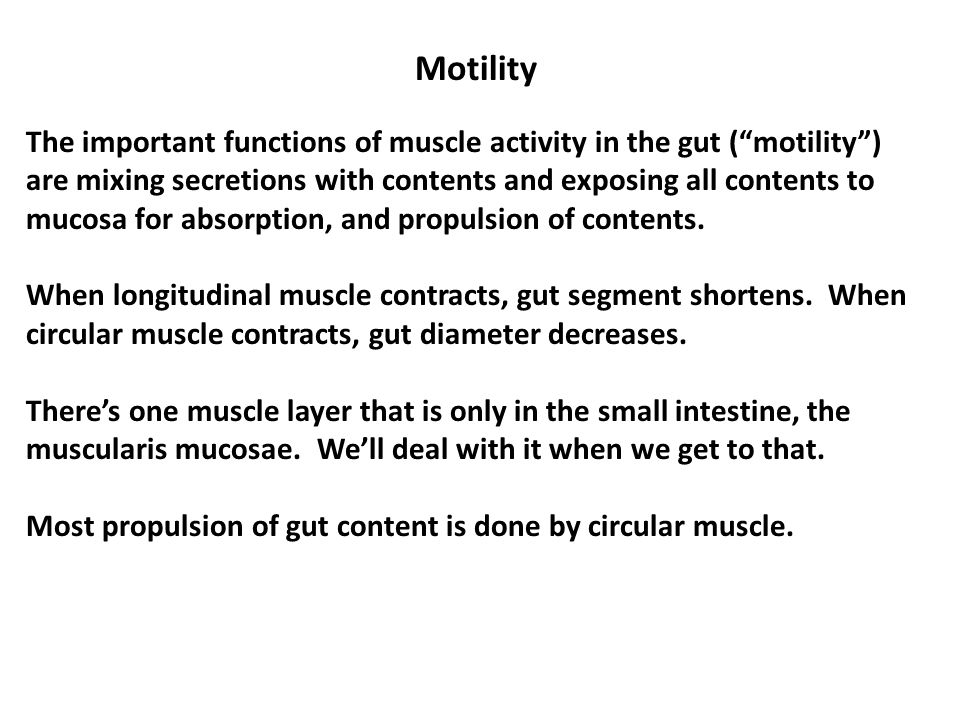 Motility The important functions of muscle activity in the gut ( motility ) are mixing secretions with contents and exposing all contents to mucosa for absorption, and propulsion of contents.