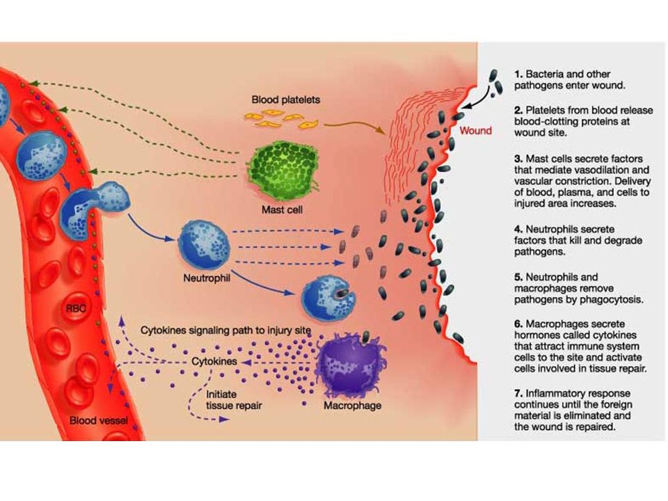 iPAD Assignment Objective: In a group of 2-3, research your given virus and create an informative slide with keynote that details the following information on your virus: – How is it contracted.