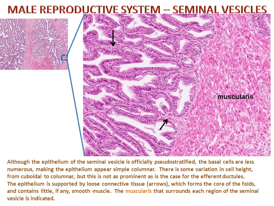 Self-check: Identify the organ. (advance slide for answers)