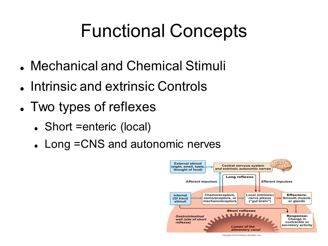 Functional Concepts Mechanical and Chemical Stimuli Intrinsic and extrinsic Controls Two types of reflexes Short =enteric (local) Long =CNS and autono
