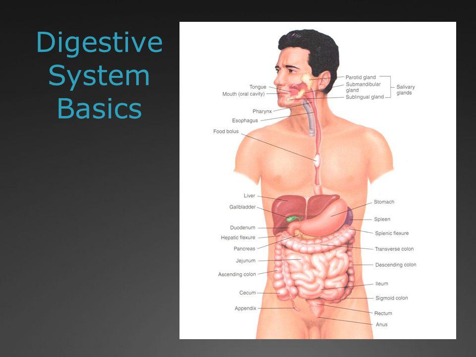 Digestive System Organ Terms Gingiv/o: Gums Gloss/o or lingu/o: Tongue Or/o or stomat/o: Mouth Esophag/o: Esophagus Pharyg/o: Pharynx Maxill/o: Jaw