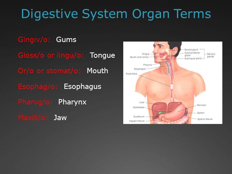 Digestive System Organ Terms Gastr/o: Stomach Duoden/o: Duodenum Enter/o: Intestines Jejun/o: Jejunum Ile/o: Illeum