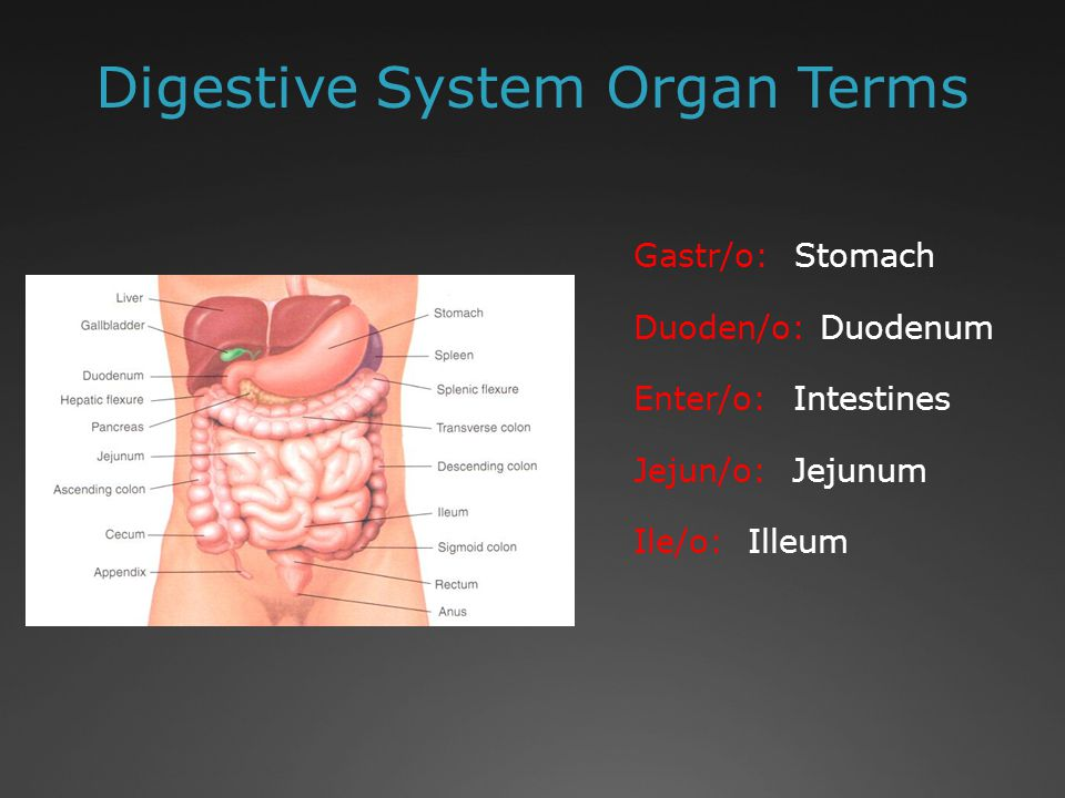 Digestive System Organ Terms Gastr/o: Stomach Duoden/o: Duodenum Enter/o: Intestines Jejun/o: Jejunum Ile/o: Illeum