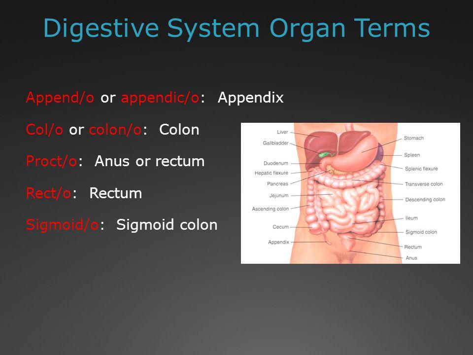 Digestive System Organ Terms Cholangi/o: Bile vessel Cholecyst/o: Gallbladder Choledoch/o: Bile duct Hepat/o: Liver Pancreat/o: Pancreas http://www.theuniversityhospital.com/livertra nsplant/html/liverandliverdiseases/anatomyfu nctions.htm