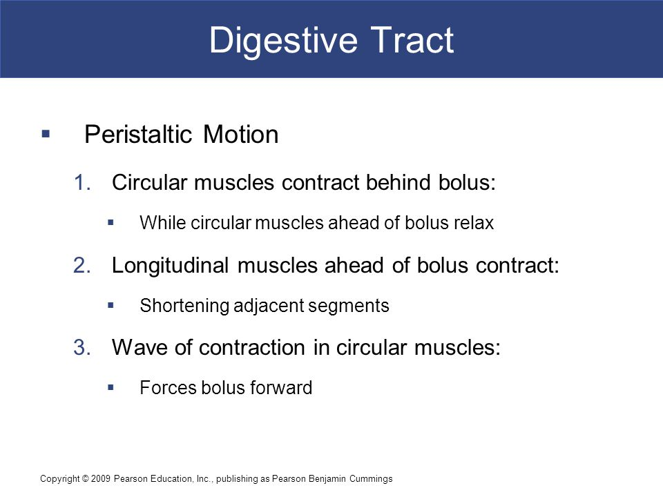 Copyright © 2009 Pearson Education, Inc., publishing as Pearson Benjamin Cummings Digestive Tract  Peristaltic Motion 1.Circular muscles contract beh