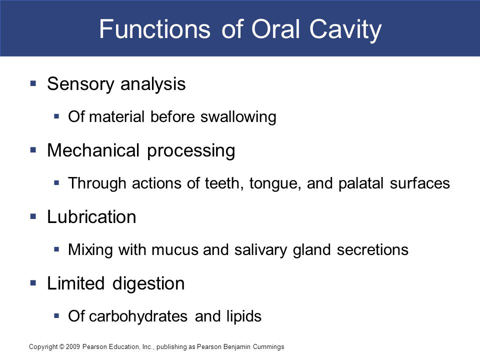 Copyright © 2009 Pearson Education, Inc., publishing as Pearson Benjamin Cummings Functions of Oral Cavity  Sensory analysis  Of material before swa