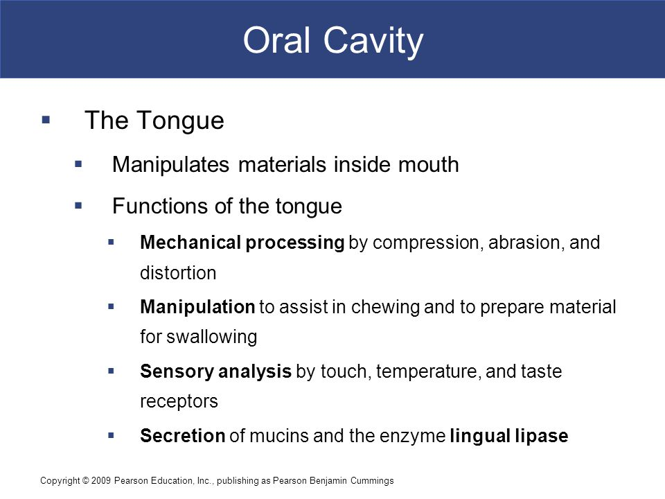 Copyright © 2009 Pearson Education, Inc., publishing as Pearson Benjamin Cummings Oral Cavity  The Tongue  Manipulates materials inside mouth  Func