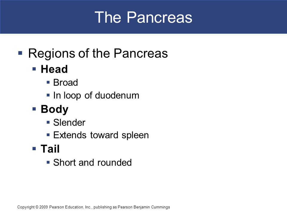 Copyright © 2009 Pearson Education, Inc., publishing as Pearson Benjamin Cummings The Pancreas  Regions of the Pancreas  Head  Broad  In loop of d
