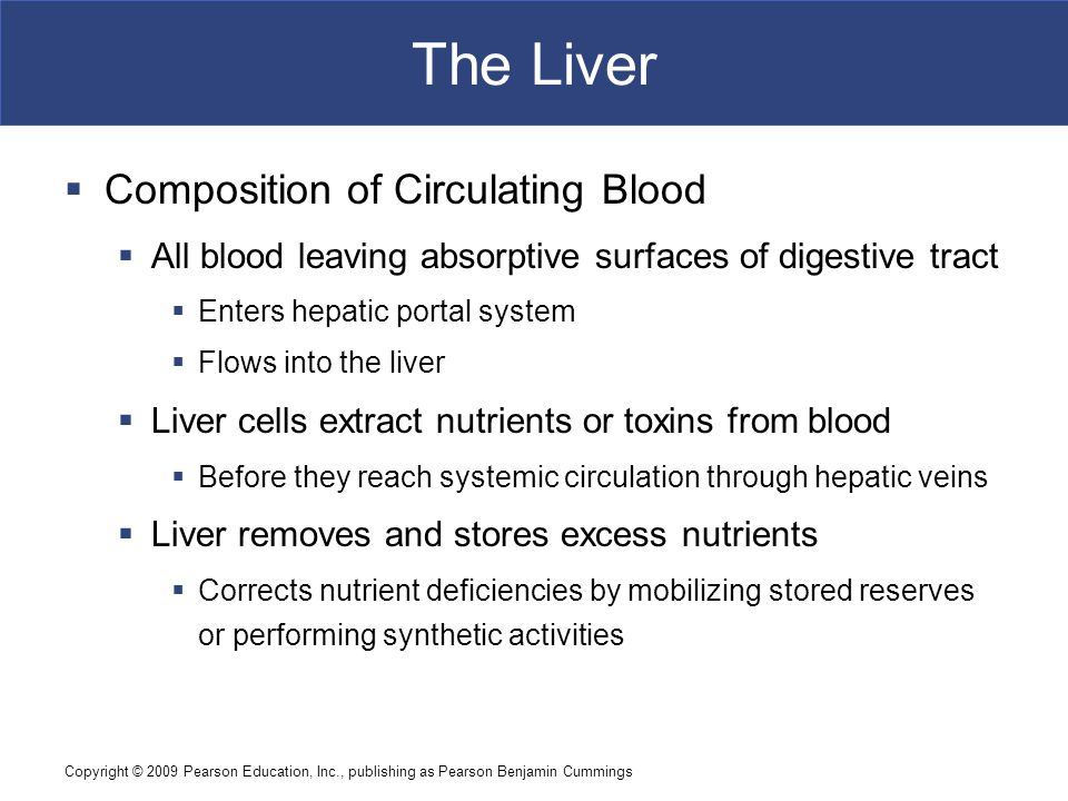 Copyright © 2009 Pearson Education, Inc., publishing as Pearson Benjamin Cummings The Liver  Composition of Circulating Blood  All blood leaving abs