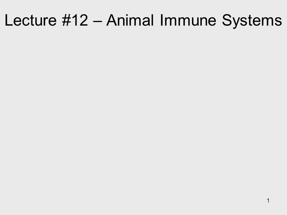 1 Lecture #12 – Animal Immune Systems