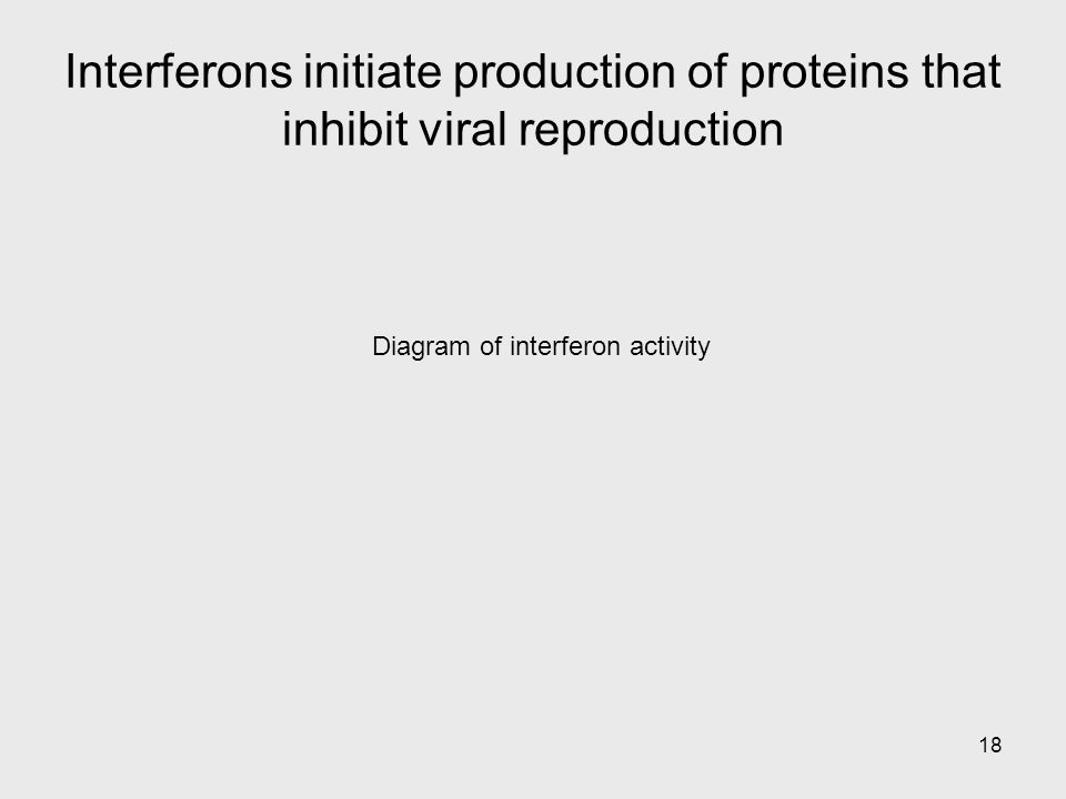 18 Diagram of interferon activity Interferons initiate production of proteins that inhibit viral reproduction