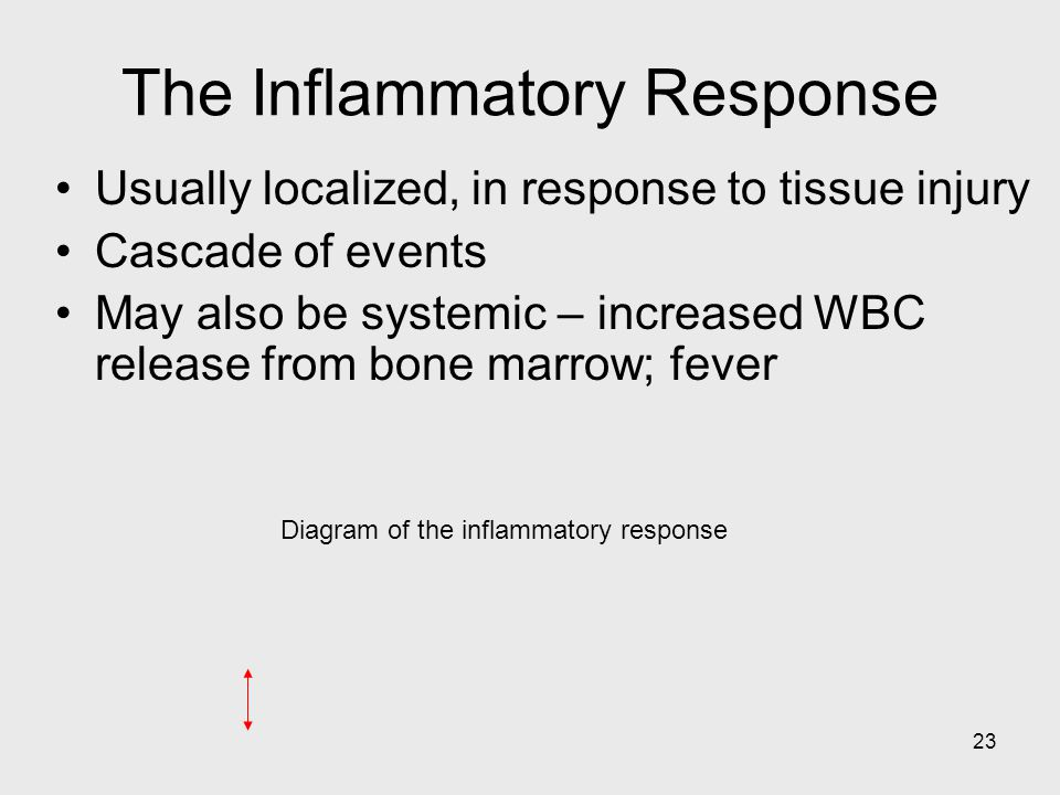 23 Diagram of the inflammatory response The Inflammatory Response Usually localized, in response to tissue injury Cascade of events May also be system