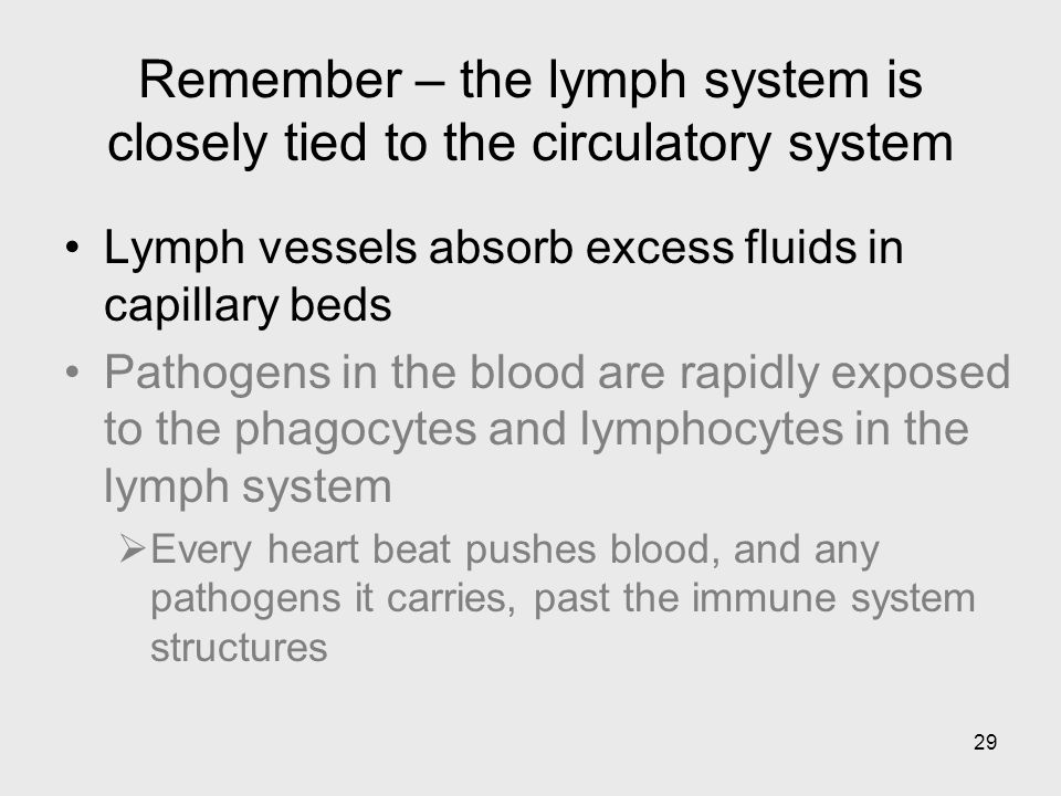 29 Remember – the lymph system is closely tied to the circulatory system Lymph vessels absorb excess fluids in capillary beds Pathogens in the blood a