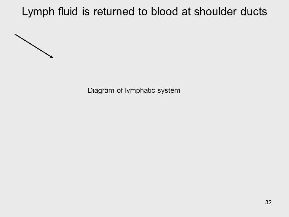 32 Lymph fluid is returned to blood at shoulder ducts Diagram of lymphatic system