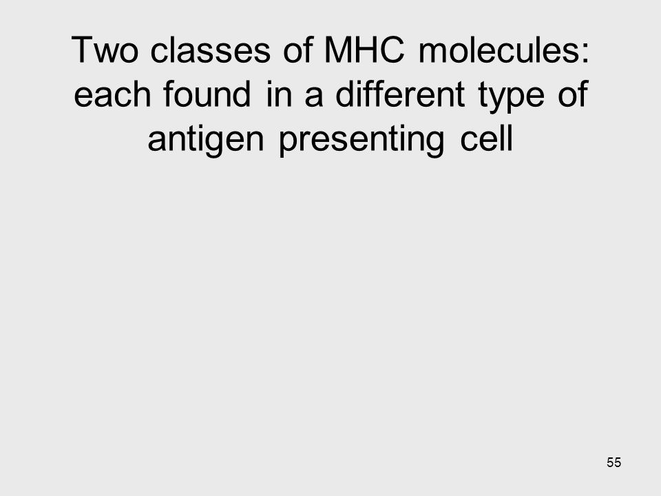 55 Two classes of MHC molecules: each found in a different type of antigen presenting cell