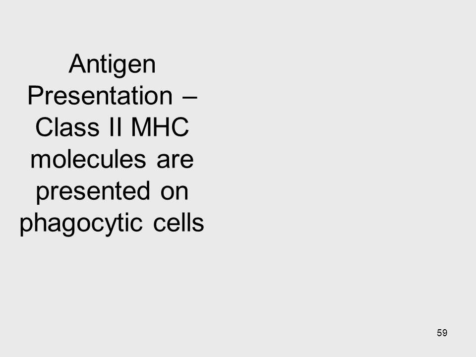 59 Antigen Presentation – Class II MHC molecules are presented on phagocytic cells