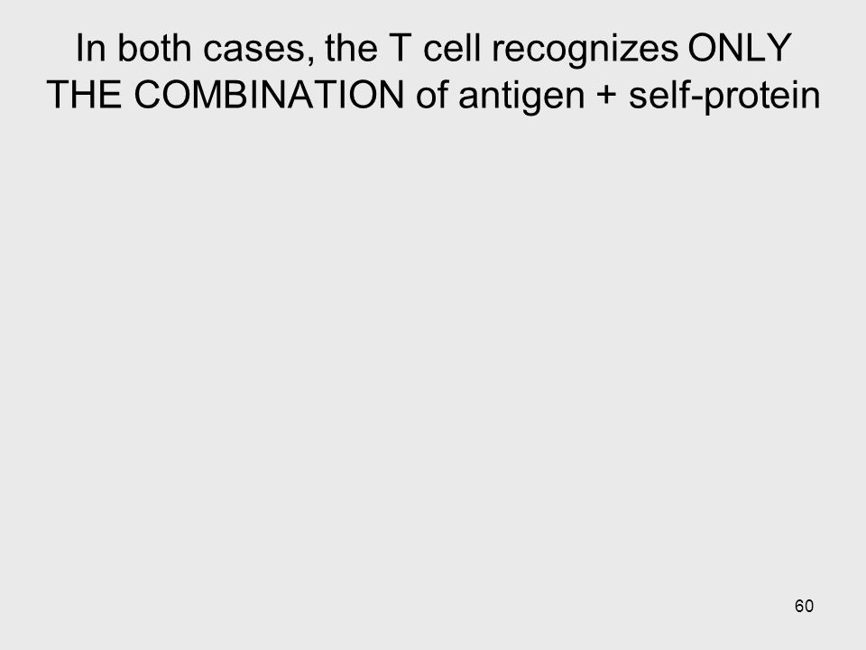 60 In both cases, the T cell recognizes ONLY THE COMBINATION of antigen + self-protein
