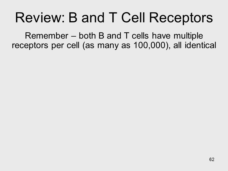 62 Review: B and T Cell Receptors Remember – both B and T cells have multiple receptors per cell (as many as 100,000), all identical