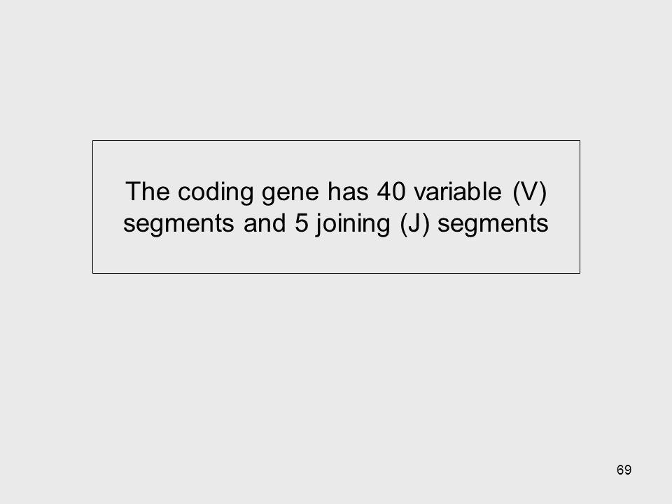 69 The coding gene has 40 variable (V) segments and 5 joining (J) segments