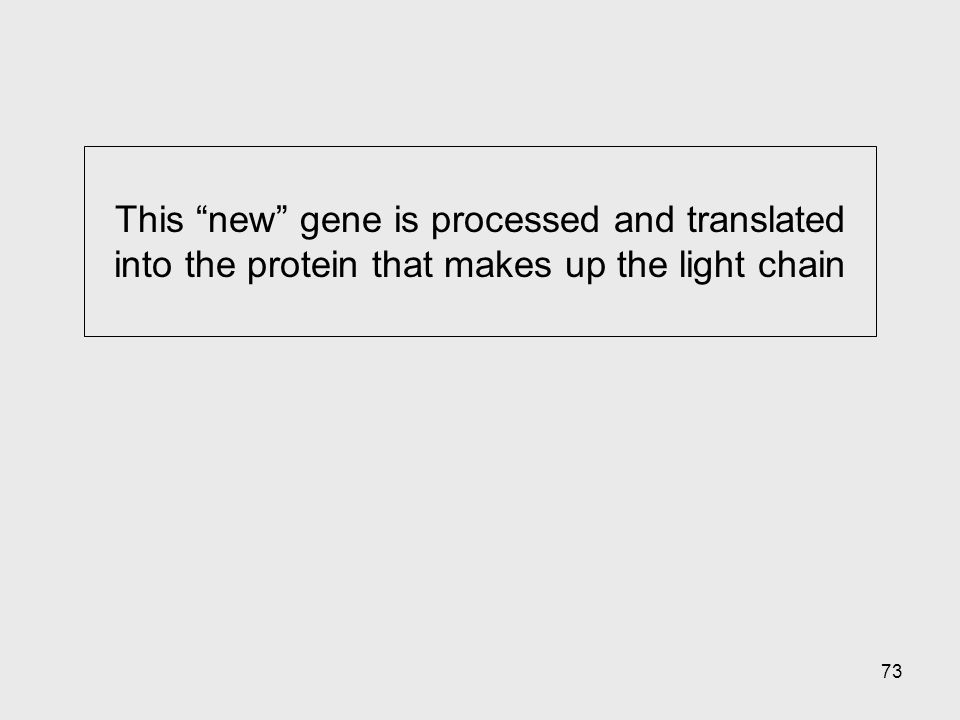 """73 This """"new"""" gene is processed and translated into the protein that makes up the light chain"""