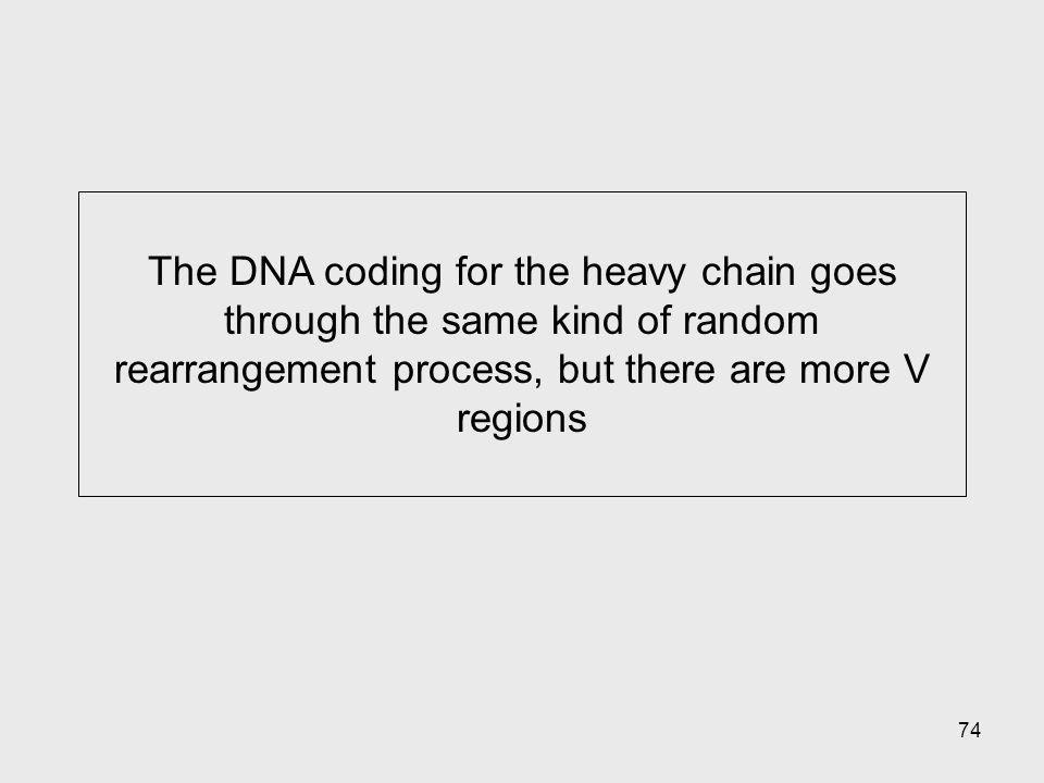 74 The DNA coding for the heavy chain goes through the same kind of random rearrangement process, but there are more V regions