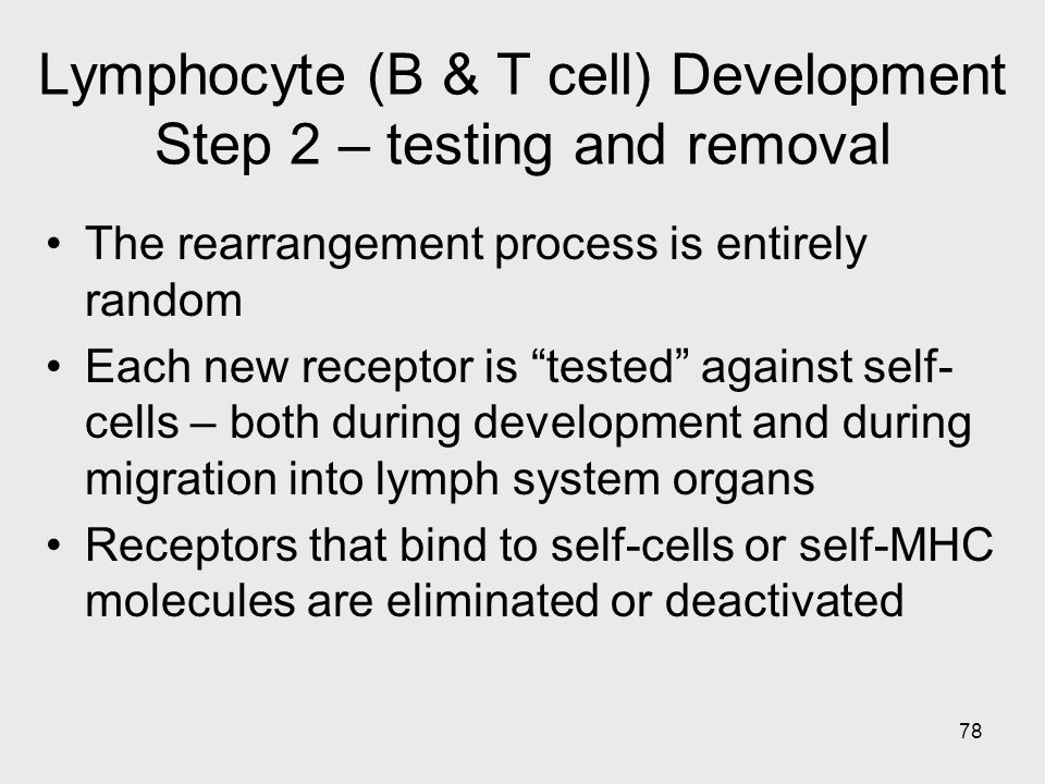 """78 Lymphocyte (B & T cell) Development Step 2 – testing and removal The rearrangement process is entirely random Each new receptor is """"tested"""" against"""