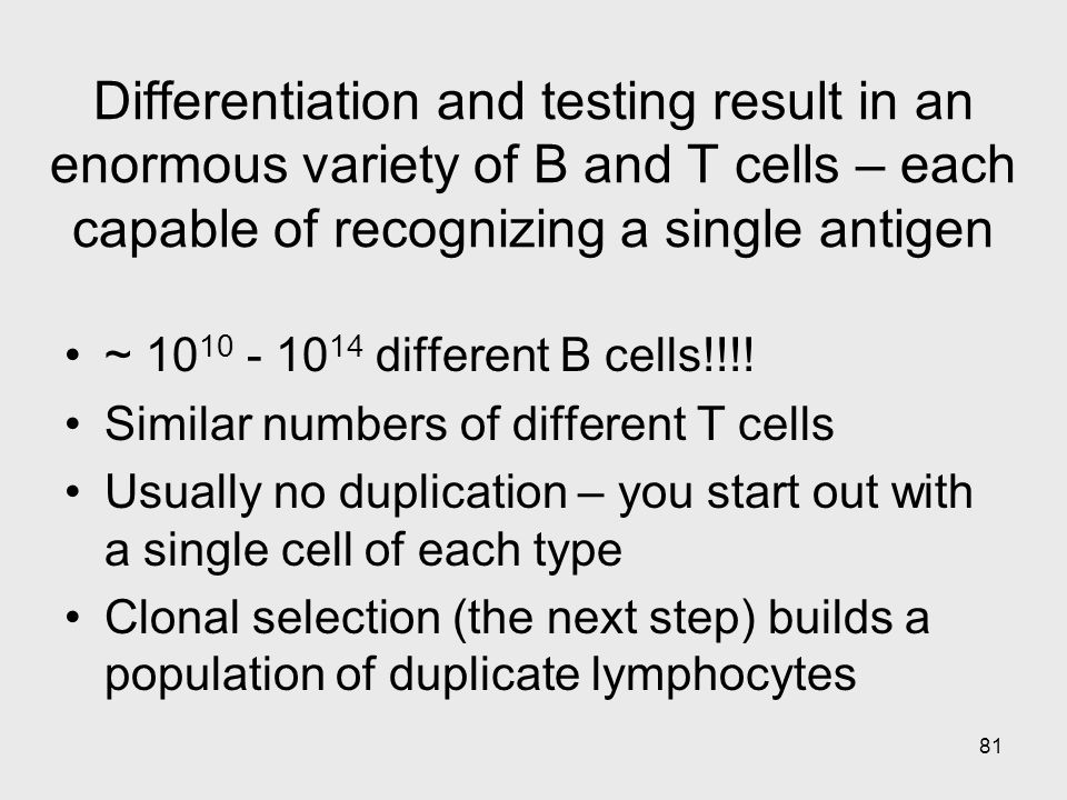 81 Differentiation and testing result in an enormous variety of B and T cells – each capable of recognizing a single antigen ~ 10 10 - 10 14 different