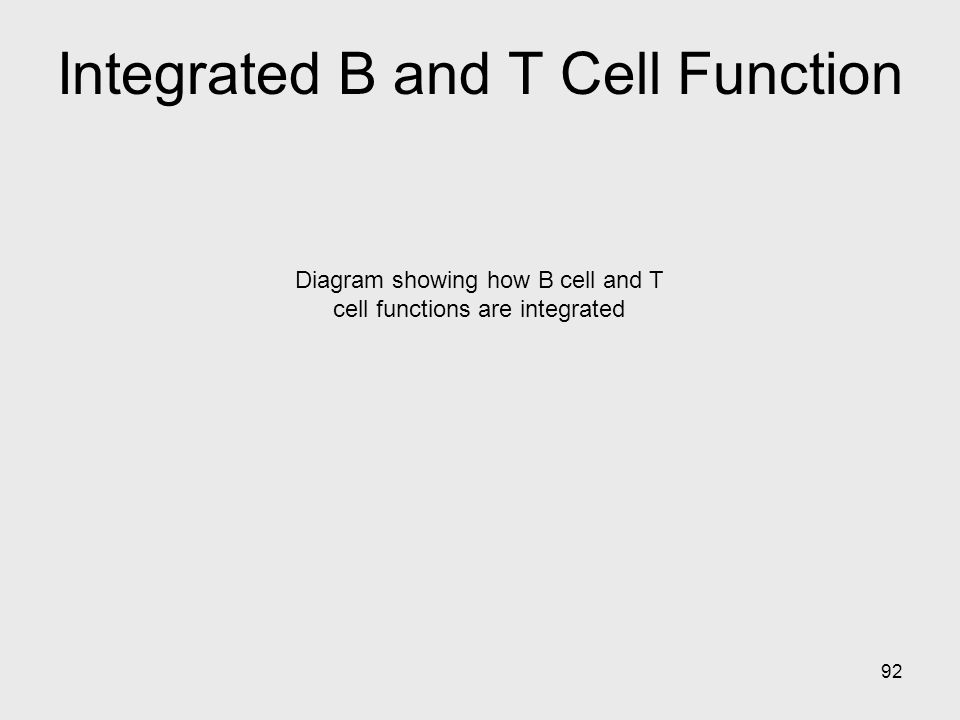 92 Diagram showing how B cell and T cell functions are integrated Integrated B and T Cell Function