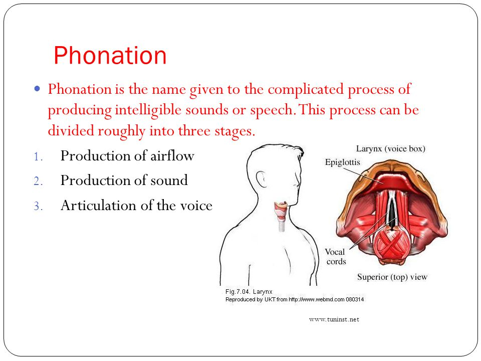 Phonation Phonation is the name given to the complicated process of producing intelligible sounds or speech. This process can be divided roughly into