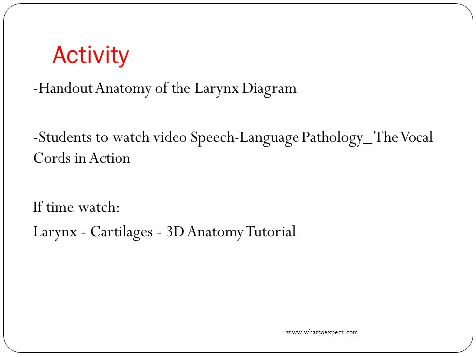 Activity -Handout Anatomy of the Larynx Diagram -Students to watch video Speech-Language Pathology_ The Vocal Cords in Action If time watch: Larynx -