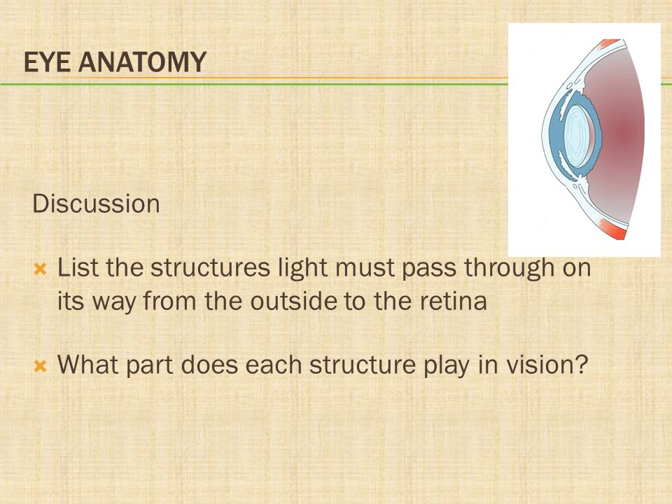 EYE ANATOMY Discussion  List the structures light must pass through on its way from the outside to the retina  What part does each structure play in