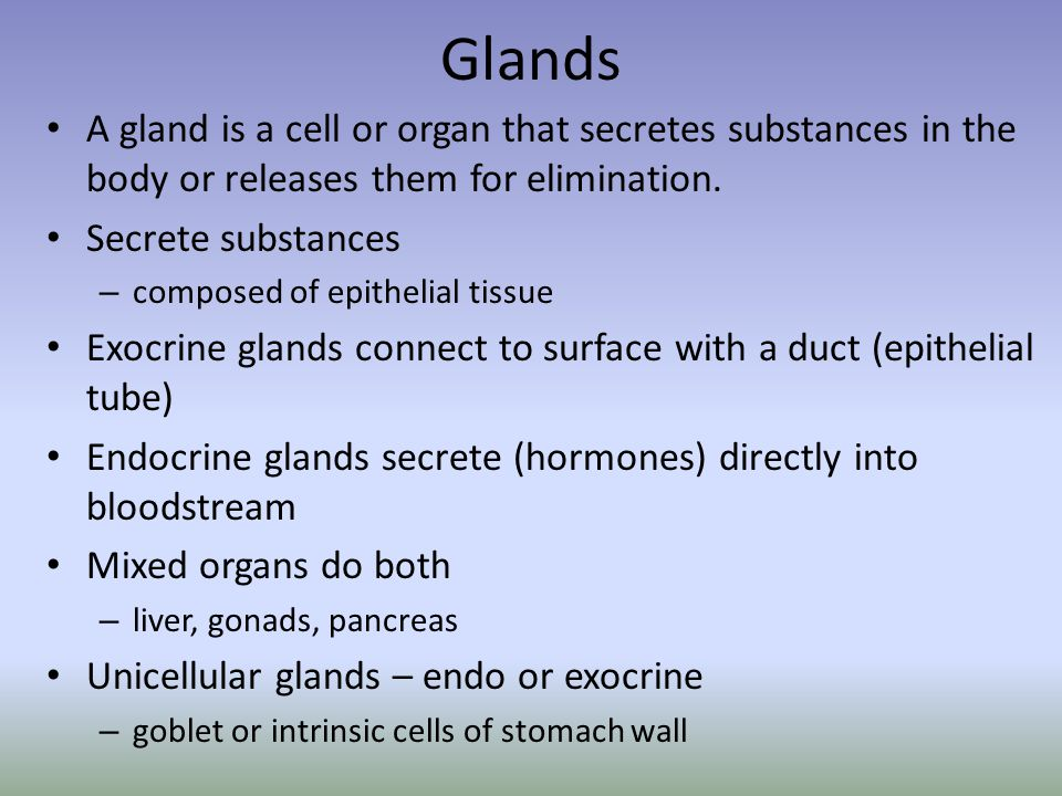 Glands A gland is a cell or organ that secretes substances in the body or releases them for elimination.