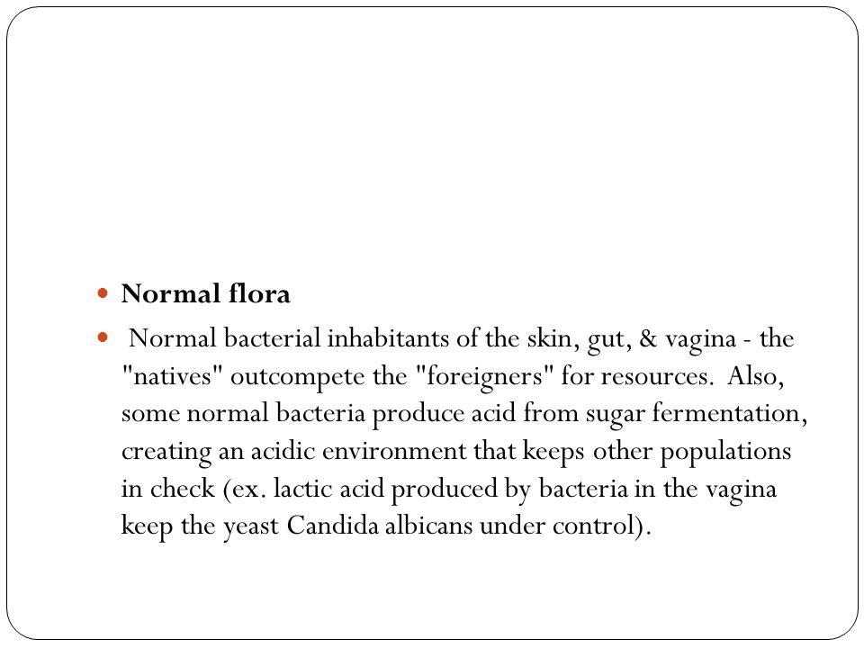 Normal flora Normal bacterial inhabitants of the skin, gut, & vagina - the