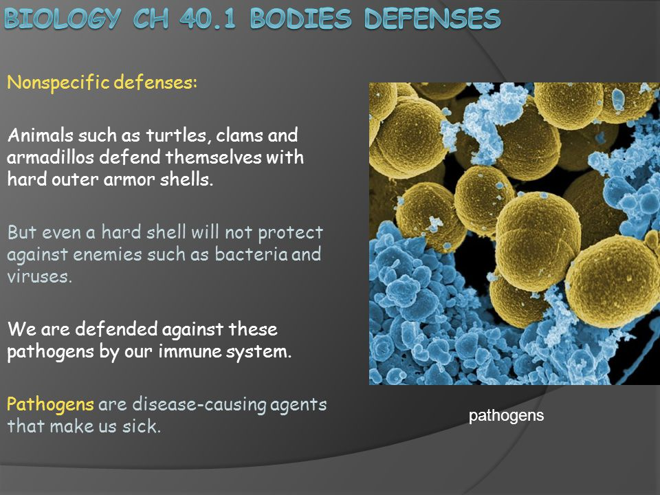 Nonspecific defenses: Animals such as turtles, clams and armadillos defend themselves with hard outer armor shells.