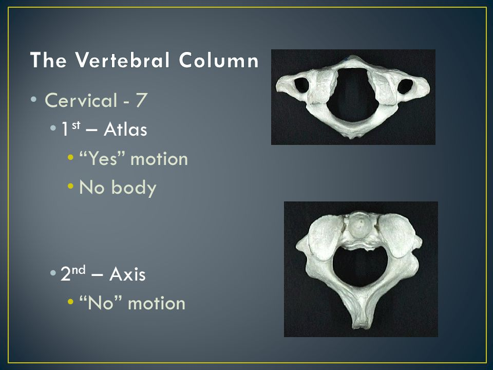 Cervical - 7 1 st – Atlas Yes motion No body 2 nd – Axis No motion