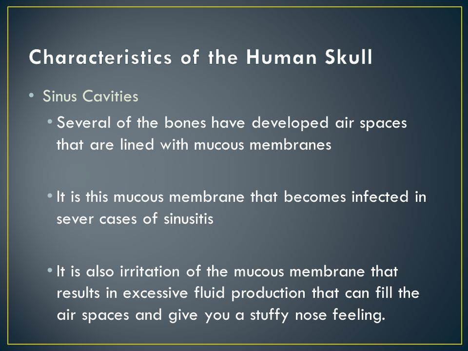 Since these sinuses are embedded in bone, they cannot be seen easily on regular skull preparations and usually require sawing into the bone to see them.