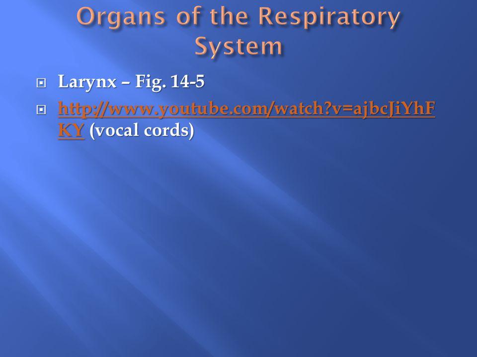  Larynx – Fig.