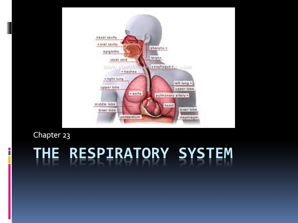 Inspiratory Reserve Volume Amount of air you can voluntarily inhale after you have completed a normal respiration cycle Inspiratory Reserve Volume (IRV)